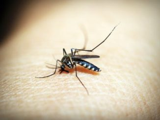 Zap Away Mosquitos with Stinger Insect Zapper